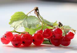 Красная смородина считается наиполезнейшей ягодой