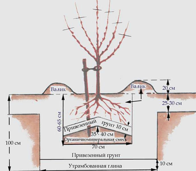 Для выращивания персиковых насаждений следует отдать предпочтение возвышенным и защищенным от ветров, но солнечным участкам с южной стороны