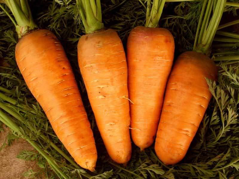 Морковь – один из любимых всеми овощей