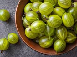 Ягоды крыжовника – ценный и полезный продукт