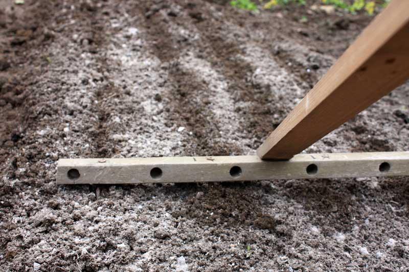На подготовленных грядах нужно сделать борозды глубиной не более 50-60 мм с расстоянием в 15-20 см