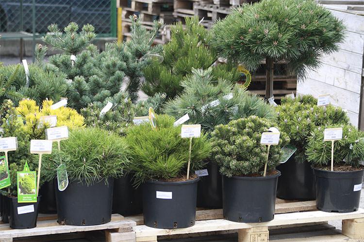 Растения поступали в атриум различными путями: большинство прибыло из Голландии в виде саженцев с закрытой корневой системой