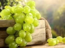 Виноград «Валентина» относится к высокоурожайным столовым сортам