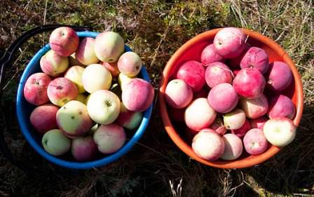 Периодическая сортировка урожая — важный момент в хранении