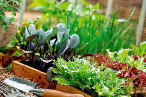 Высокие огороды и грядки на территории дачного участка — это удобно и практично!
