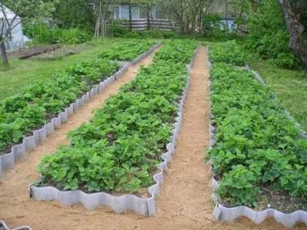 Высокие грядки и огороды очень удобны и практичны, использовать их возможно под овощи, ягоды, зелень и декоративные растения
