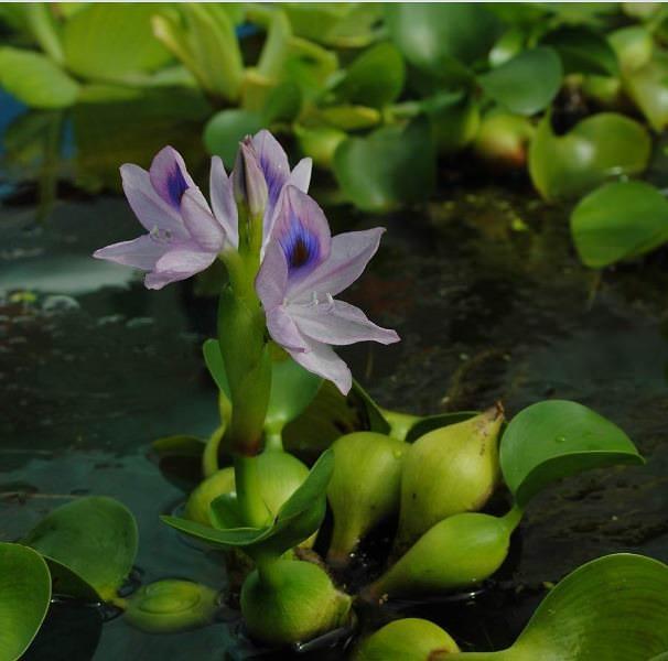 Если созданы все необходимые условия, то уход за этим растением летом не представляет особых проблем