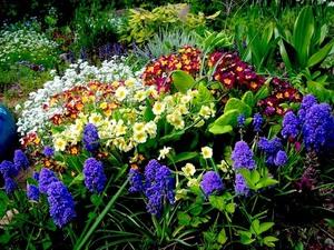 Выбор многолетних цветов