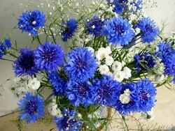 Синие гвоздики являются неприхотливым растением