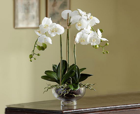 Когда грунт и горшок подобраны верно, орхидеи долго живут в комнатных условиях и обильно цветут
