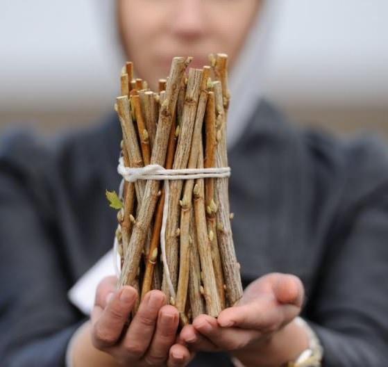 Посадка смородины осенью черенками – удачное решение
