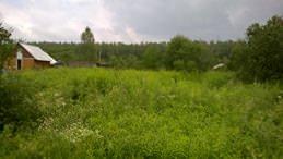 Наша семья недавно (неделю назад) приобрела земельный участок 10 соток. Планы на него грандиозные....