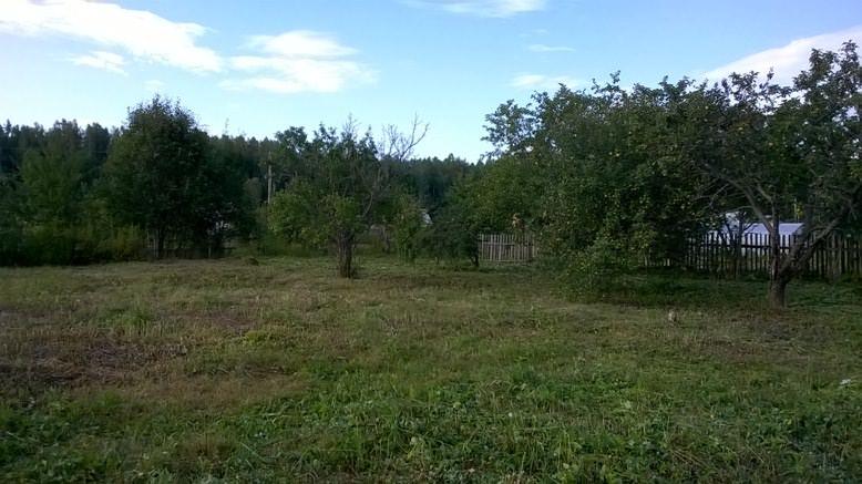 Далее участок ждет посев газоном, а осенью я посажу тюльпаны