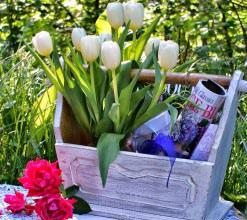 Тюльпан является самым популярным весенним цветущим растением