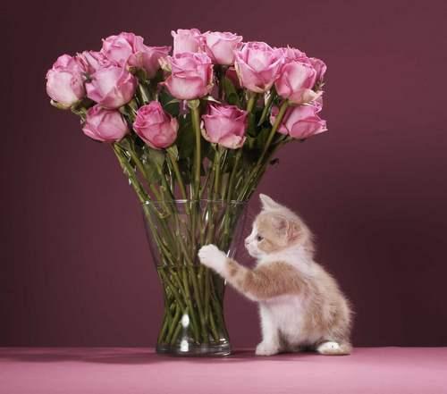 Чтобы цветы простояли в воде свежими как можно дольше, для составления букетов стоит отдавать предпочтение специальным срезочным сортам
