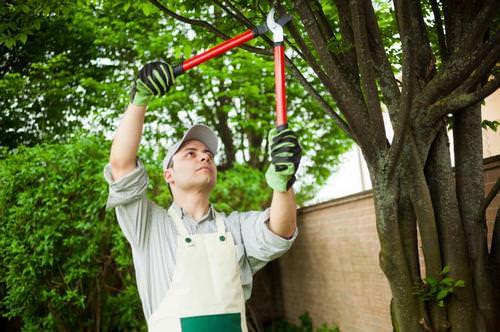 Своевременная обрезка всех фруктовых и ягодных плодовых деревьев – гарантия обильного урожая