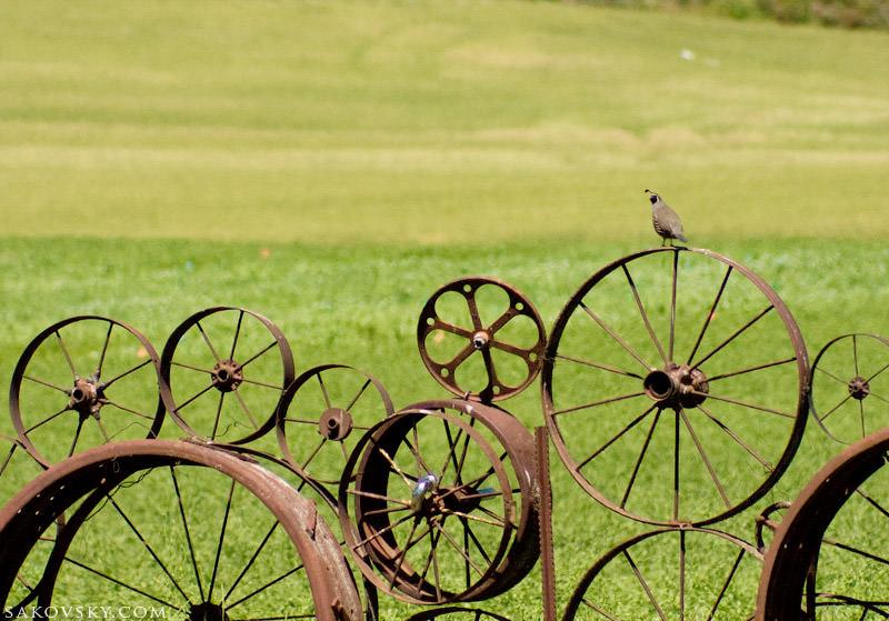 Всегда возможен и более креативный подход — забор из колес, валов, шестерней вокруг дачи своими руками