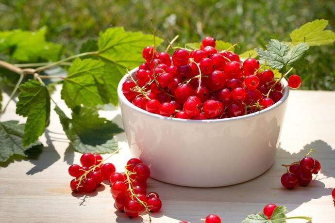 Пользу для человеческого здоровья несут как небольшие ягодки, произрастающие на кустарнике, так и листва