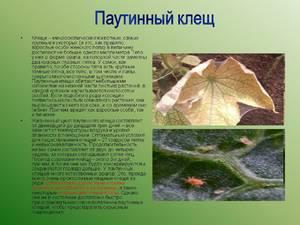 Как вывести клещей на растениях
