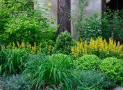 Растения и кустарники, любящие тень