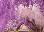 Сад цветов Асикага