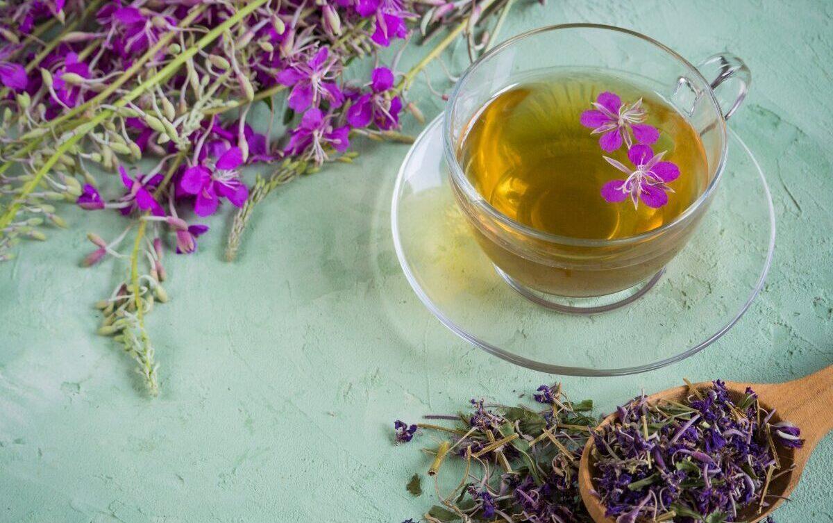 Иван чай растение свойства