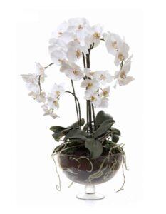 орхидея фаленопсис уход корни