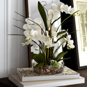 орхидея фаленопсис выращивание
