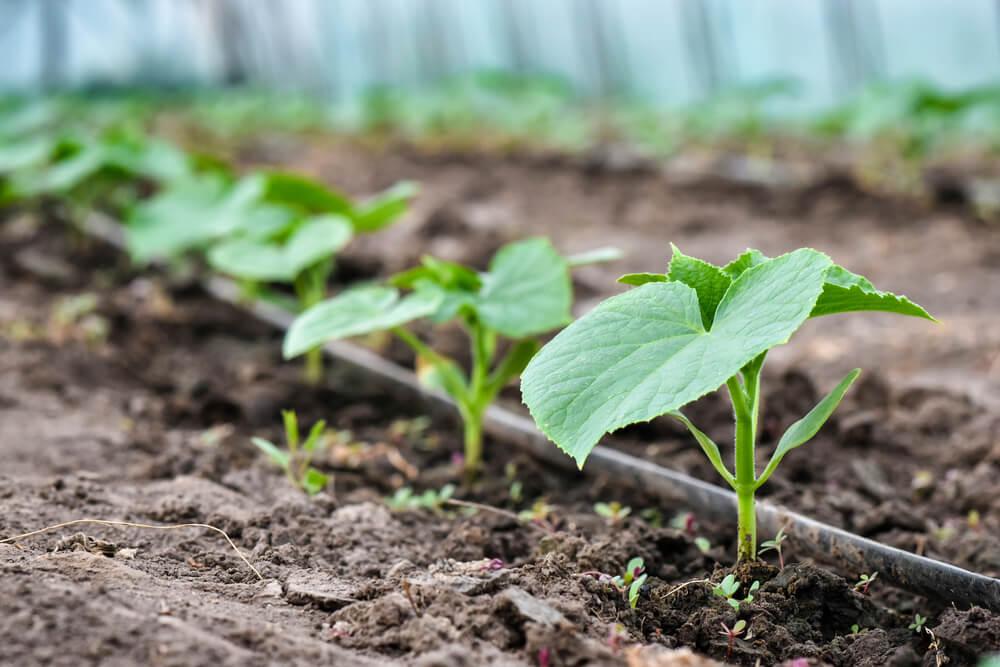 система капельного полива огорода