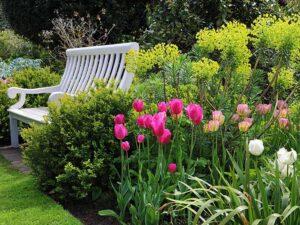 тюльпаны в огороде