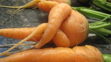 Морковь неправильной формы