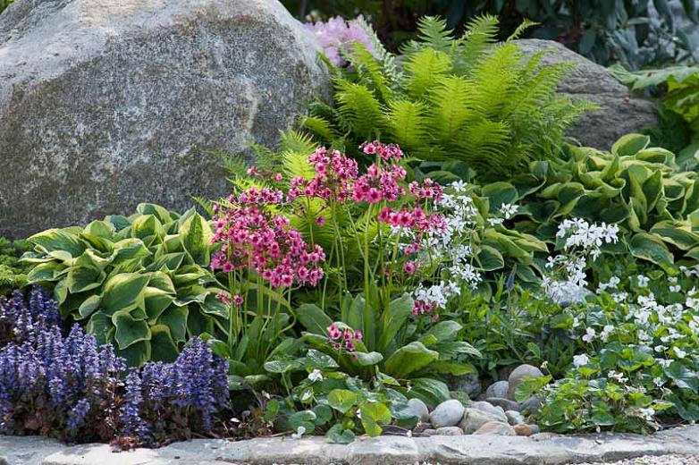 Щитовник мужской или папоротник в саду