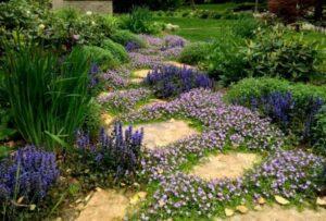 Dąbrówka rozłogowa замена газона